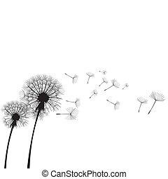 dandelions, soprando, wind., dandelion, infla, dois, ilustração, time., vetorial, vento