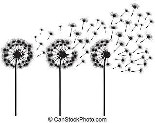 dandelions, três
