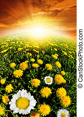 dandelions with daisies on the meadow