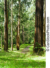 dandenong, yarra, nacional, gamas, parque, bosque, valle