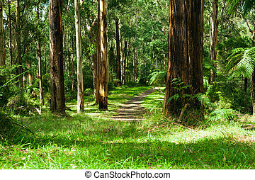 dandenong, yarra, nemzeti, fekszik, liget, erdő, völgy