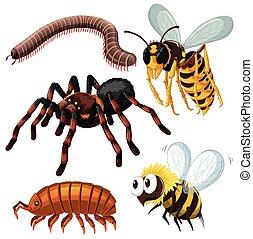 dangereux, espèce, différent, insectes