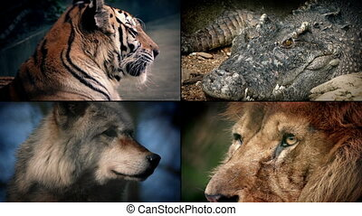 Dangerous Animals Montage - Lion, Crocodile, Tiger, Wolf -...