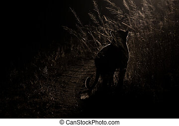 Dangerous leopard walk in darkness to hunt for prey artistic conversion