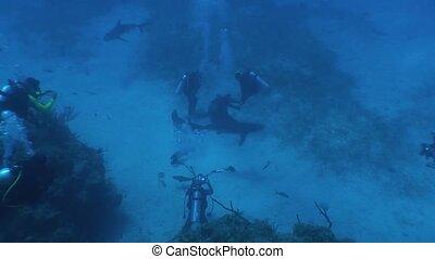 Dangerous Shark Underwater Video - Underwater Cuba Caribbean...
