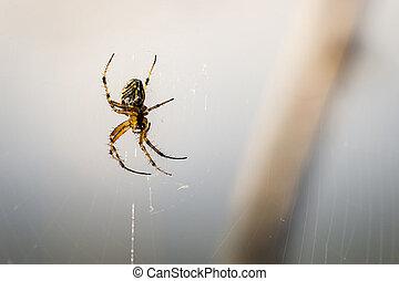 Dangerous spider