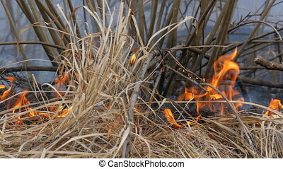 Dangerous wild fire in nature, burns dry grass. Burnt black...