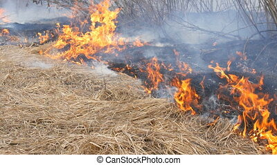 Dangerous wild fire in nature, burns dry grass. Burnt black...