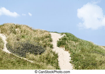 Danish coast landscape with dunes covered in lyme grass in...