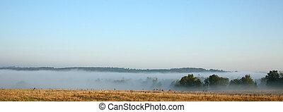 Danish cows in the fog