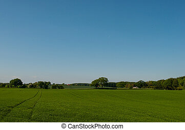Danish field with trees in the background