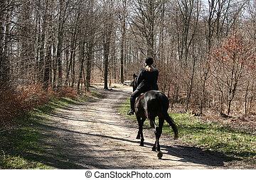 danish horses12