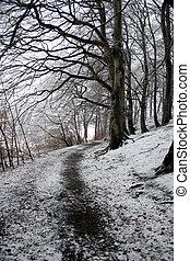 danish winter13 - winter in the countryside in denmark