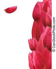 danken, bouquetten, eps, tulip., 8, u, kaart