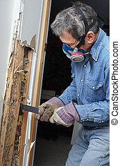 danneggiato, parete, togliendo, termite, legno, uomo