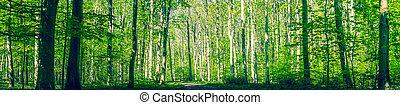 danois, vert, forêt, Arbres