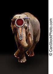 danse, exécuter, éléphant