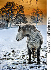 dapple, grå, häst, hos, vinter, solnedgång