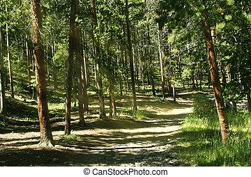 Dappled sunlight streams through dense forest along ATV trail in the Colorado mountains.