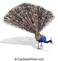 darabka, felett, vakolás, peacock., nagyszerű, út, árnyék, ...
