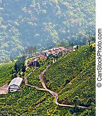darjeeling, ciudad, reina, de, colinas, plantación de té, y,...