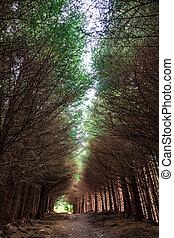 Dark alley through the forest
