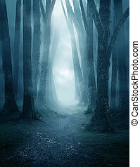 Dark and Misty Forest Pathway