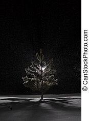 Snowy Winter Landscape at Night