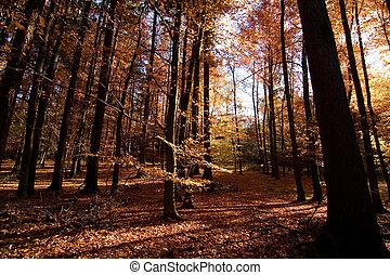 Dark Autumn Forest - A Romantic autumn forest with golden...