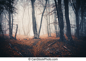 Dark autumn forest with trail in fog. Fall woods