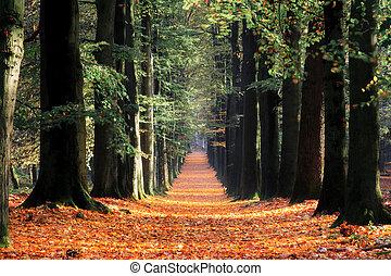 Dark autumn lane