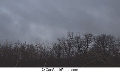 Dark autumn storm clouds fly over the bare trees of the...