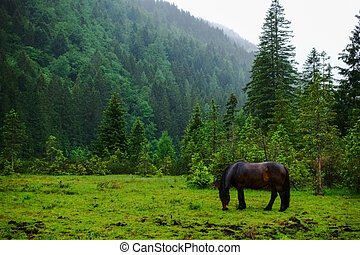dark brown horse eats on a green meadow in the mountains