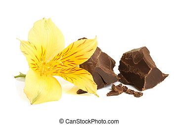 Dark chocolate with flower of alstroemeria on a white...