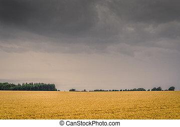 Dark clouds over a golden field