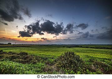 dark clouds over a green field