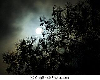 Dark Cloudy Full Moon Pine Tree Silhouette