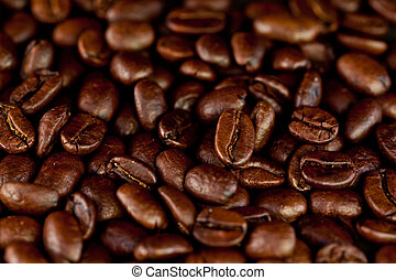 Dark coffee seeds laid out together