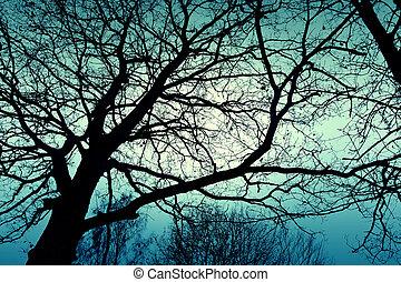 Dark dead winter tree.