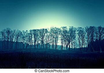Dark dead winter trees and sky.