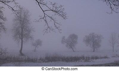 dark early morning winter fog mist