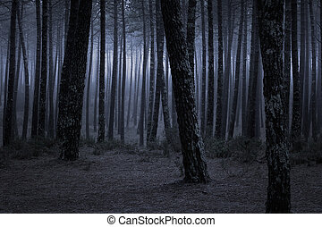 Spooky and dark foggy forest at dusk