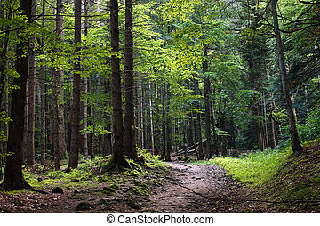 dark forest at dusk in wild romanian mountains