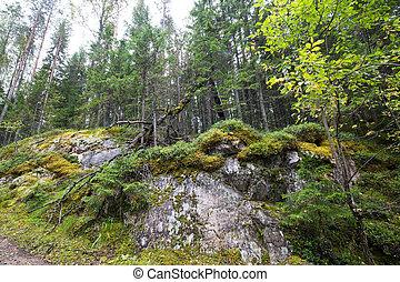 Dark forest background.