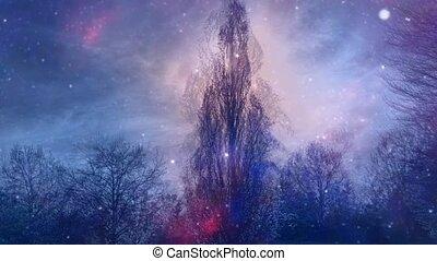 Dark Forest in magic light - Dark Forest. Night landscape ...