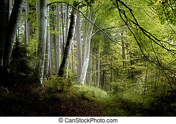 dark forest - An image of a beautiful dark forest in bavaria...