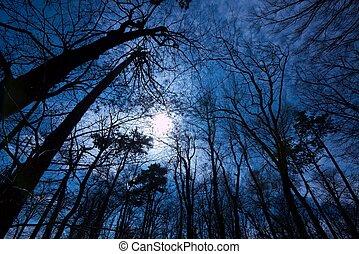 Dark Forest - Deep dark forest in the evening with leafless...