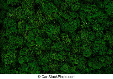 Dark green moss background, natural ecological texture
