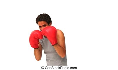 Dark-haired man with boxing gloves isolated on a white...