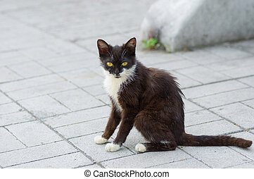 Dark kitten with yellow eyes sitting on an empty street